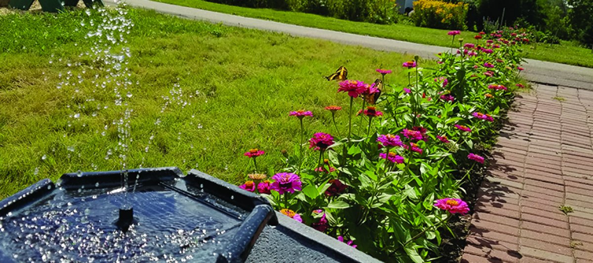 Solar water feature zinnias