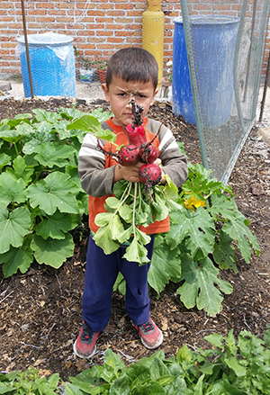 Sustaining Apaseo el Alto: Out of desolation, a garden can grow