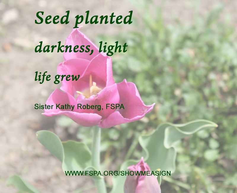 pink-flower-seed-planted-darkness-light-life-grew