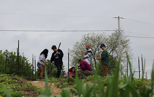 Longfellow students volunteering in the organic garden at Villa St. Joseph