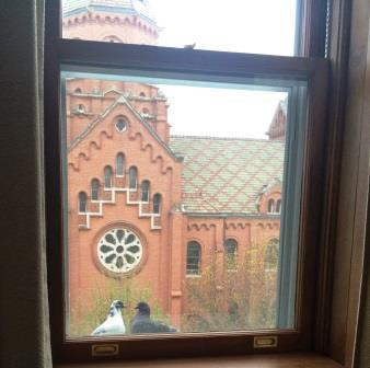 window-pigeons-St.RoseChapel